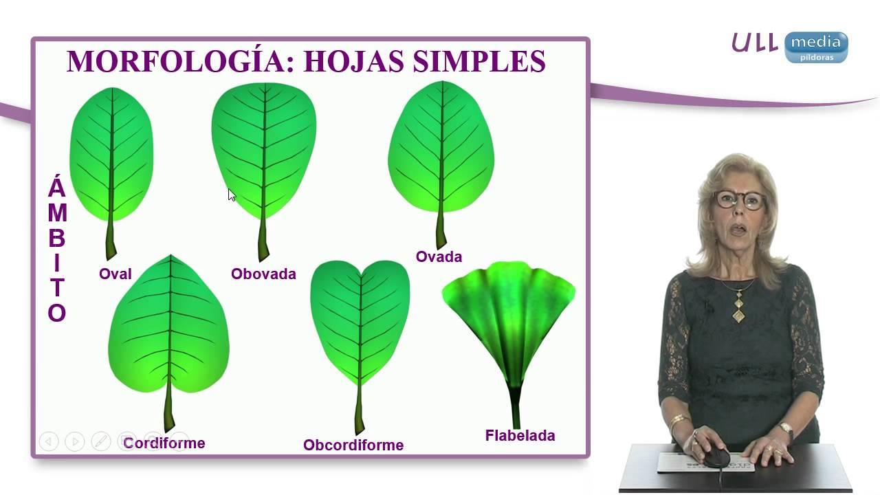 Morfolog a de espermat fitos las hojas youtube for Tipos de arboles y su significado