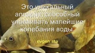 Как ловить на пенопласт ч 1(Теория, Ловля карпа, карася, леща, белая рыба, уловистая снасть, насадка пенопласт, каша, прикормка, удочка,..., 2014-11-19T09:18:17.000Z)