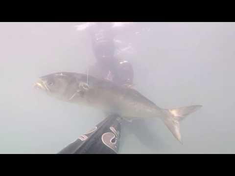 Podvodni ribolov 2018 Spearfishing croatia 2018 ( Hoba 1.8kg i Strijelka 3.7kg )