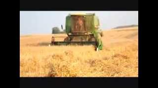 █▬█ █ ▀█▀ żniwa 2013 John Deere 1075 & massey ferguson 3080 vs pszenica ozima