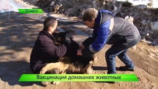 """Вакцинация домашних животных. ИК """"Город"""" 29.03.2016"""