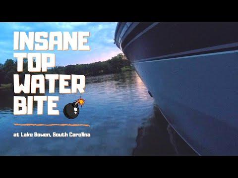 MASSIVE Top Water Blow-ups At Lake Bowen (BASS FISHING)