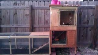 Awesome Outdoor Rabbit Hutch With A 6' Run.