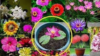 मार्च में लगाएं घर में इन जादुई फूलों को और भरें अपने घर को खुशियों से ।।