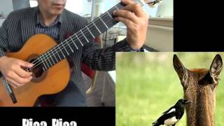 Pica Pica - Classical Guitar - Played,Arr.-DONGHWAN_ NOH