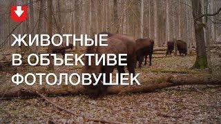Чем занимаются животные в лесу, когда их никто не видит. Кадры с фотоловушек