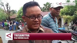 Download Video Kucing Emas Masuk Rumah Warga Aceh Barat MP3 3GP MP4