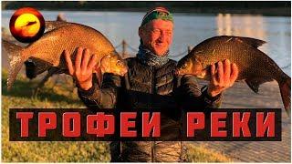 Трофеи реки / Ловля леща летом / Ночная рыбалка