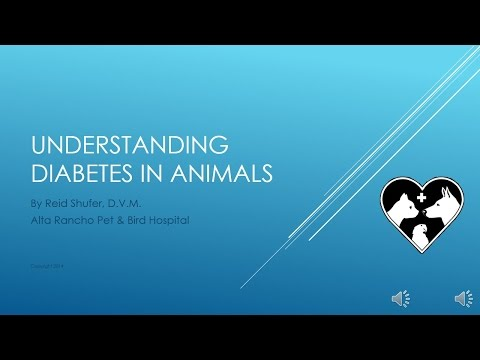 Understanding Diabetes in Dogs and Cats