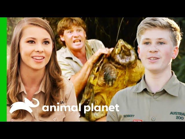 Incredible Animal Moments From Season 1 of Crikey! It's The Irwins (Compilation)