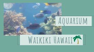 Oahu, Hawaii - Waikiki Aquarium