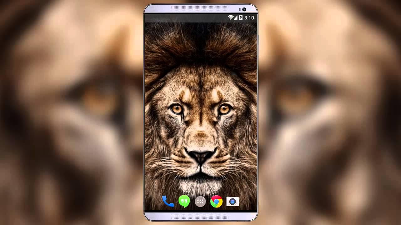 Popular Wallpaper Mobile Lion - maxresdefault  Image_40253.jpg