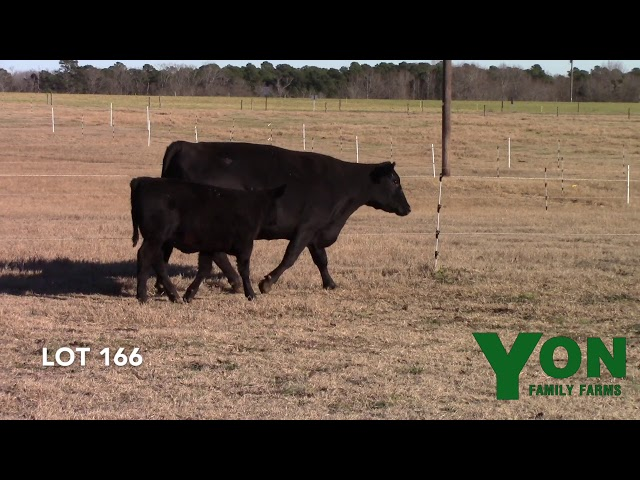 Yon Family Farms Lot 166