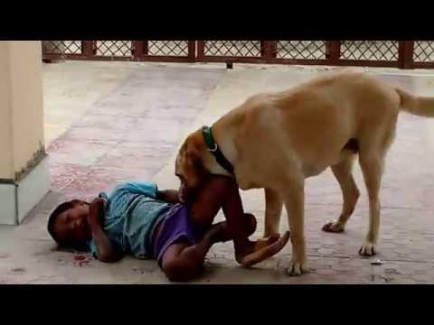 When a Labrador Retriever Plays with Kids