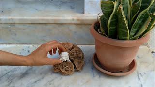 6 nouvelles idées pour rendre vos pots de fleurs plus beaux- embellir vos pots de fleurs