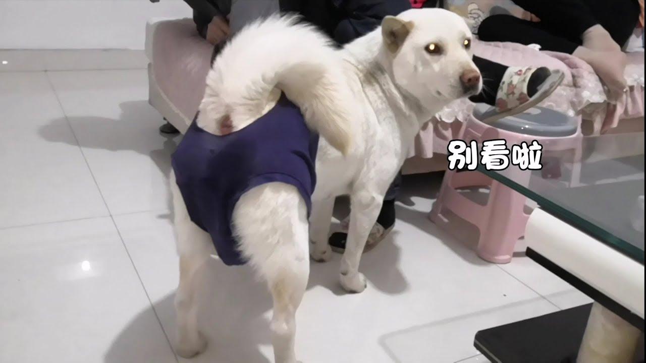 画像 犬 生理