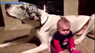 Самое Смешное видео Смешные детки Дети и животные