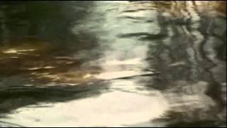 Desastre ecológico, fuga de crudo en Coatzintla 23 10 14