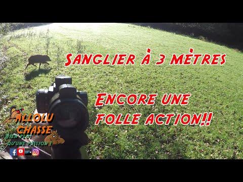 sanglier-à-3-mètres!!-belle-action-de-chasse-aux-sangliers-!!