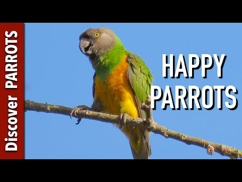 Happy Parrots Ep.1 - African Forest Sounds To Play For Your Parrot | Discover PARROTS
