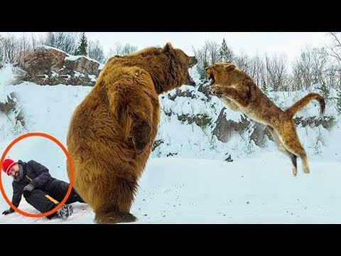 Hero Animals Saving Humans Caught On Camera