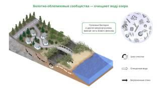 Схема работы биологического фильтра, очищающего потоки, впадающие в оз. Иссык-Куль
