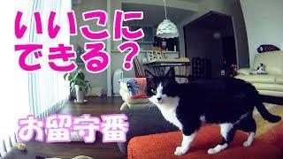 【隠し撮り】お留守番中の猫は何してる?&念願の生ドアラ