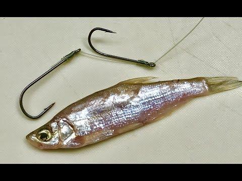 9 Ways To Hook 3 Fish Bait - DIY Fishing - 9 Cách Móc Mồi - 9 طرق لربط 3 بيت سمك