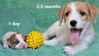 PUPPY's first 10 weeks. How the puppy changes. Puppy from birth up to 2.5 months. Funny dog. Puppies
