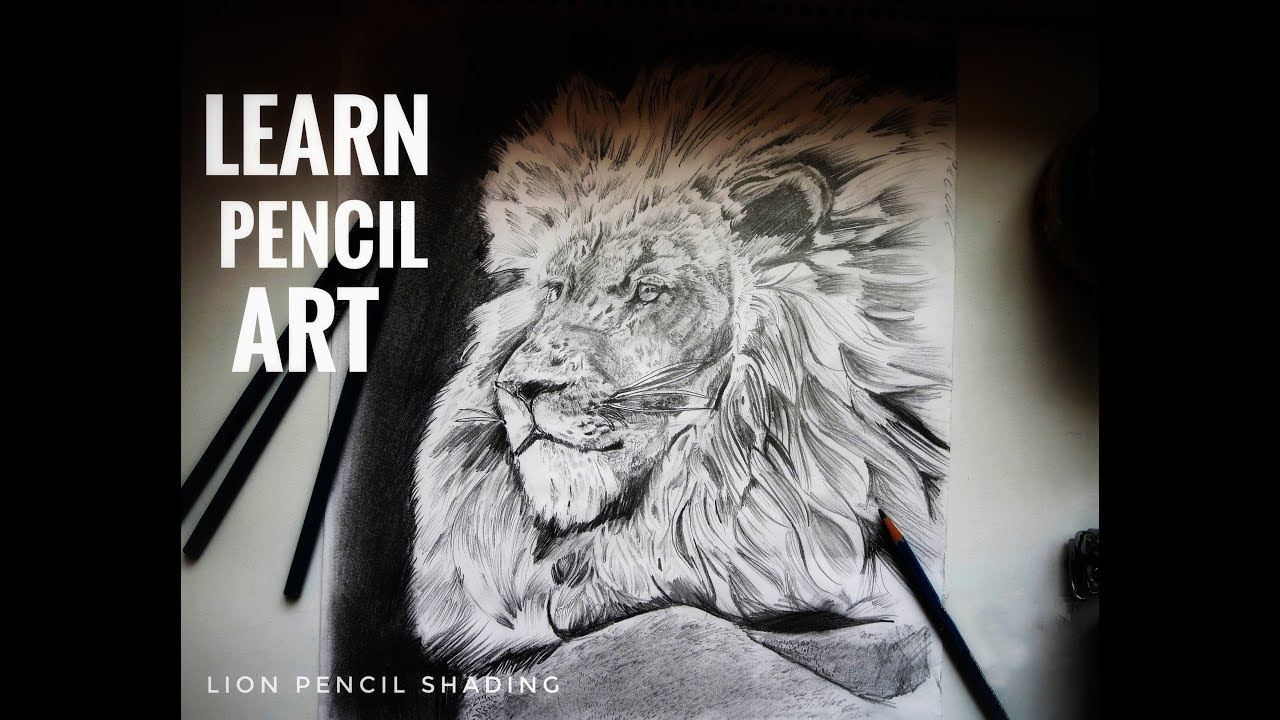 Lion pencil shading youtube