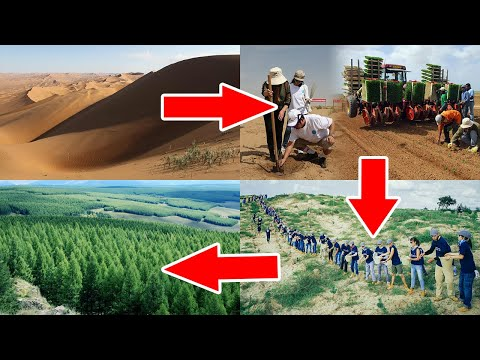 Innovative Methods Showing How China Turns Desert Into Forest