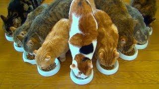 \いただきまーす!/猫9匹のごはん風景に癒やされる