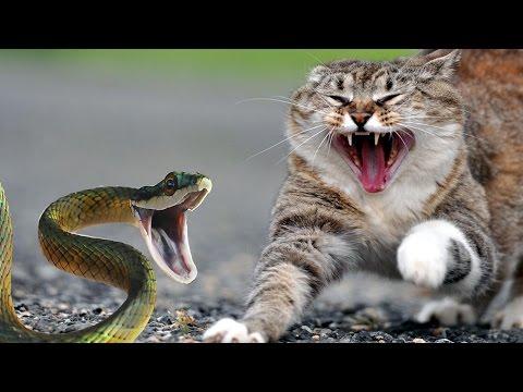 Brave Cats Fight Snakes