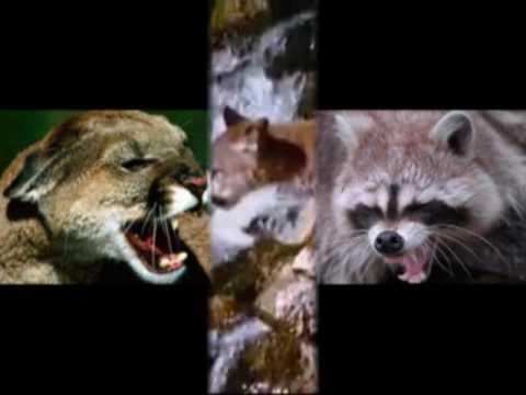 FIGHT CLUB DEGLI ANIMALI: FELINI VS MUSTELIDI
