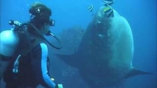 Diving Bali - Mola Mola Magic!