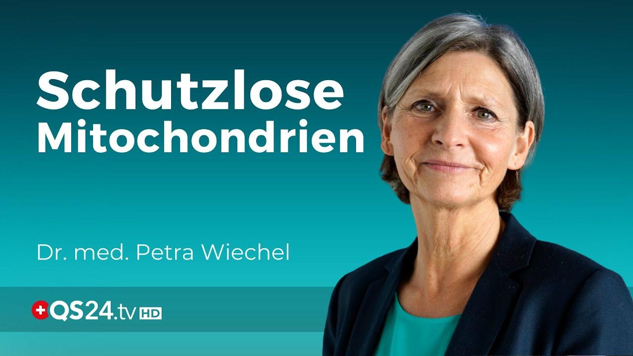 Download Erhöhte Lipidperoxide (PerOx) – Wenn den Mitochondrien der Schutz fehlt  | Dr. med. Wiechel | QS24
