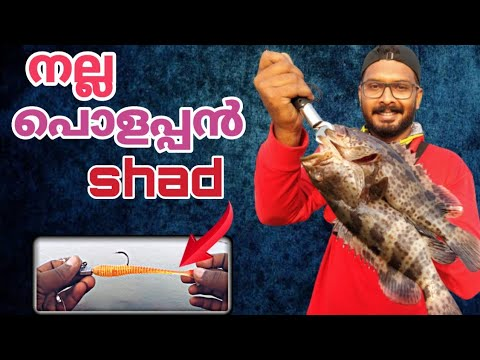 #grouper #hamoor #fishing hamoor catching kerala harbour || grouper hunting in shad|| psychoangler.