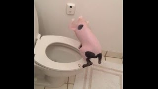 Hairless Cat Poops in Toilet and Flushes