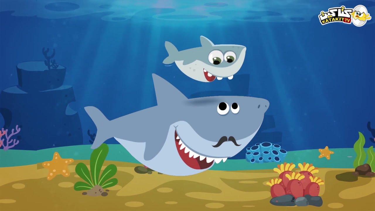 طفل القرش   كتاكيت بيبي 2020