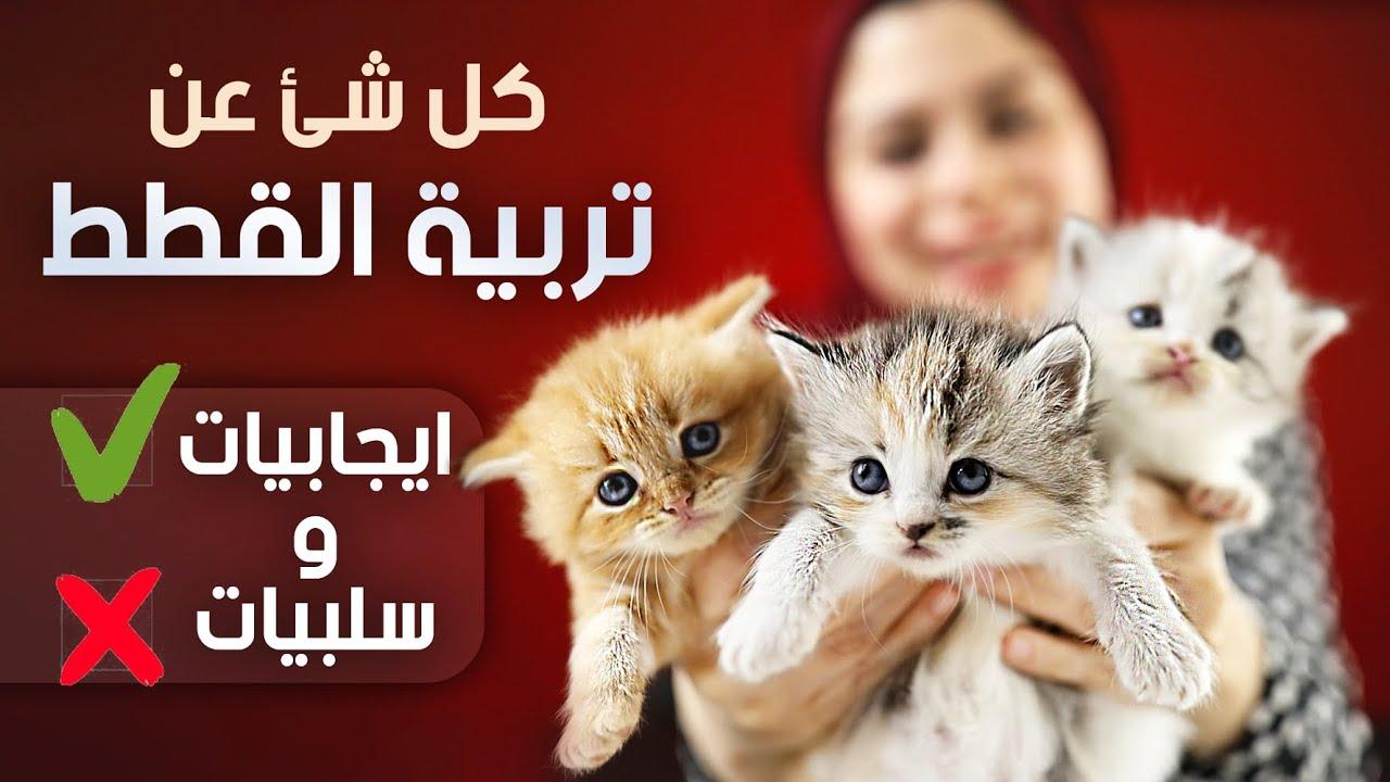 كل شئ عن تربية القطط و ليه مقدرش استغني عن قطتي