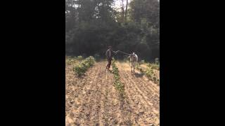 15 Seconds in Myanmar - farmer