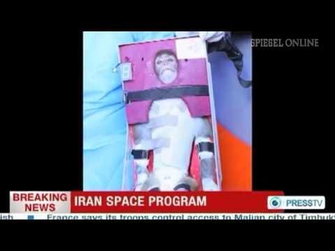 Affe im All: Iran soll Fake-Foto veröffentlicht haben