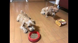 お友達のらくちゃん(左)と一緒にご飯を食べてみました。 ・・・期待を裏切...