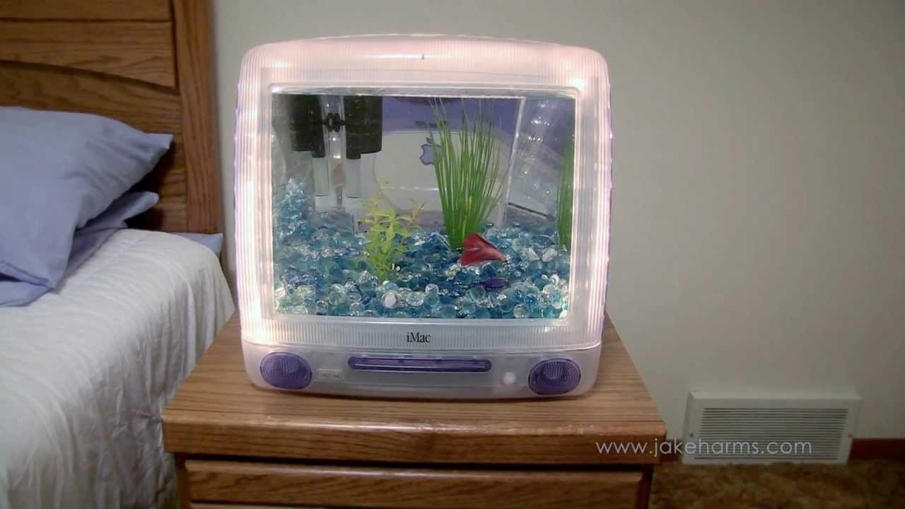 how to move house with a fish tank