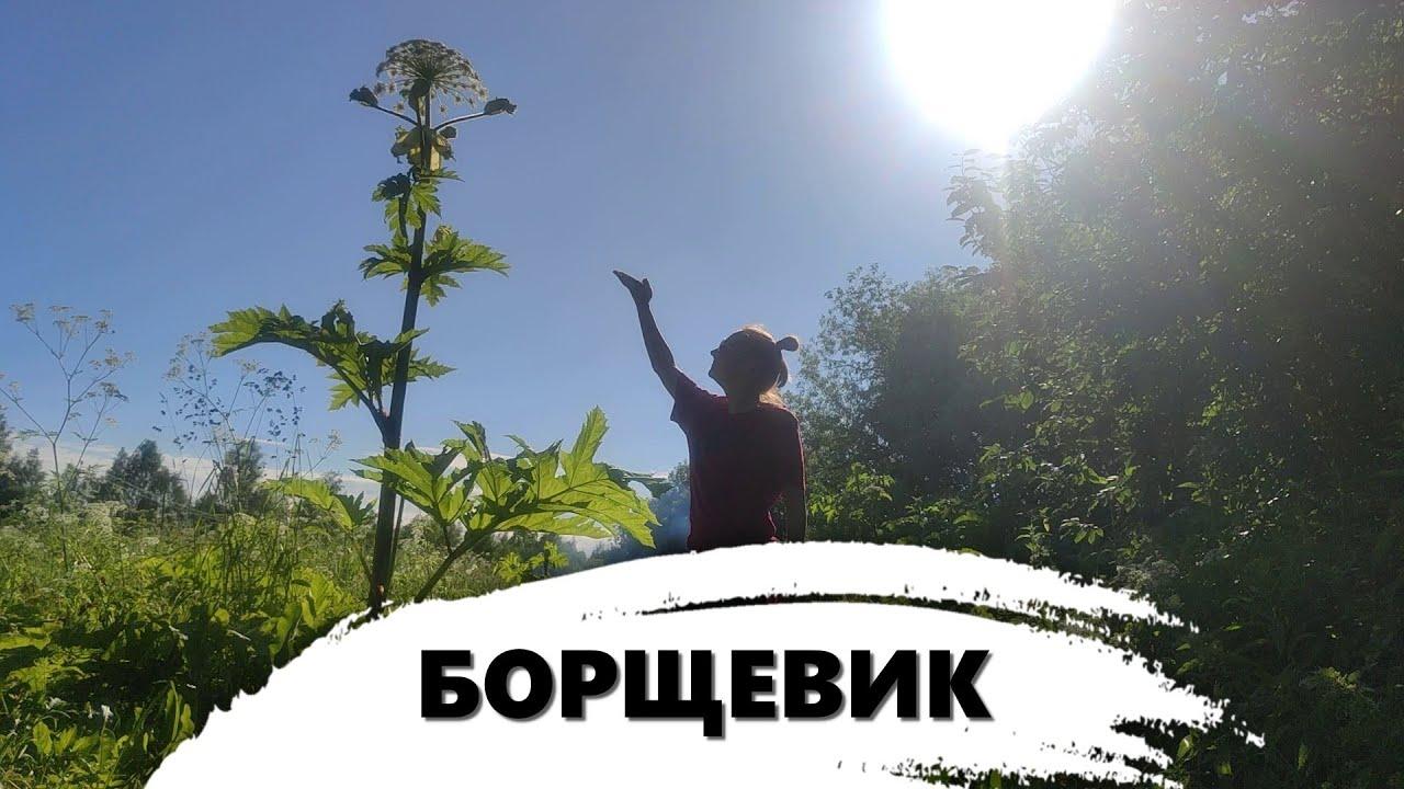 VLOG    БОРЬБА С ВРЕДИТЕЛЕМ.