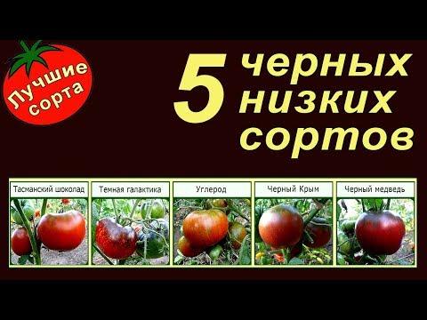 5 ЧЕРНЫХ НИЗКОРОСЛЫХ УРОЖАЙНЫХ ТОМАТОВ (лучшие сорта томатов для открытого грунта)