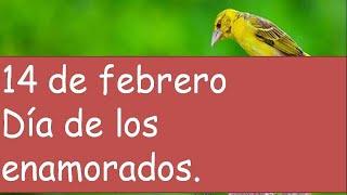 14 De Febrero, Día De Los Enamorados, Frases Románticas