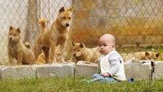 廣西土猎犬.