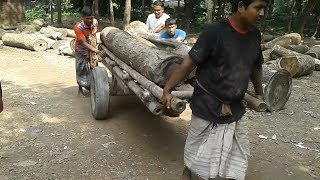 2 Pcs of Heavy Wood Lifting and Cutting in Rural Saw Mill of Asia-BD। Hard Workers Working Hard
