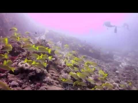 Diving in Mozambique & Tanzania